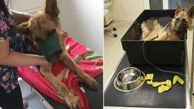 Sedmiletý chlapec prý téměř ubil psa tyčí: Zvíře bojuje o život na veterině.