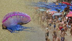 Na jižním pobřeží Španělska si turisté musí dát pozor, vyskytují se tam nebezpečné měchýřovky