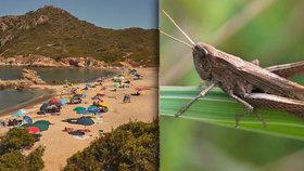 Na Sardinii útočí miliony kobylek. Místní obyvatelé nemají téměř co jíst.