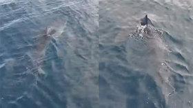 Žralok v Chorvatsku se vrátil na Makarskou