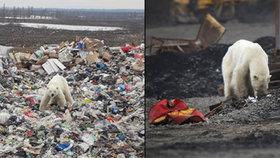 Hladová a vyhublá medvědice dorazila do ruského města Norilsk.