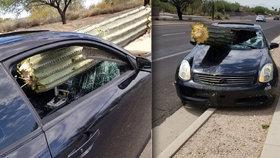 Bizarní nehoda: Řidič (39) se srazil s kaktusem! Obří rostlina mu prolétla předním oknem.
