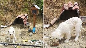 Pejsek žije už 18 měsíců na místě, kde zemřel jeho páníček.