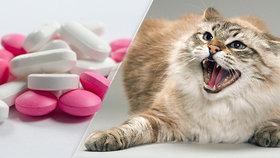 kočka a ibalgin