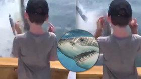 Rodinný rybářský výlet narušil žralok bílý. Muž natočil, jak přímo před nimi vyskočil z moře.