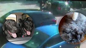 Tři psi zemřeli zbytečně v rozpáleném autě.