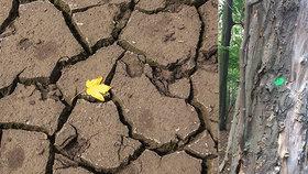 Až tři čtvrtiny planety ohrožuje ničivé vedro a sucho