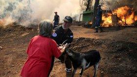 Řeckým hasičům se stále nepodařilo dostat pod kontrolu lesní požár v centrální části ostrova Euboia, kvůli kterému museli být evakuováni obyvatelé čtyř vesnic a také jeden klášter (14.8.2019)