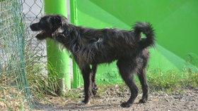 Pes měl po operaci bolesti a zlomenou nohu nepoužíval.