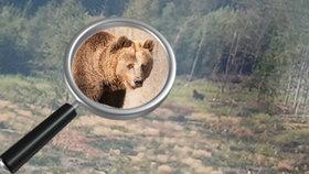 Na Zlínsku se opět pohybuje medvěd. Radnice Zubří zveřejnila fotografii a varuje