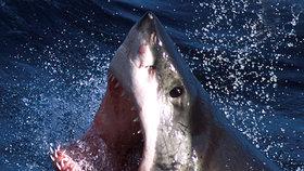 Žralok bílý, (ilustrační foto)