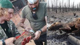 Veterináři z Čech pomáhají v hořící Amazonii: Jen občas najdeme žijící zvířata.