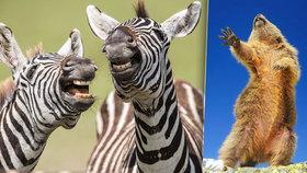 Finalisté soutěže o nejvtipnější fotku z divoké přírody