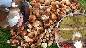 Kdo se v těchto dnech vydá do lesa, nestačí se divit. A díky ideálnímu počasí o houby doslova zakopává!