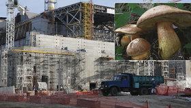 Radioaktivita způsobená výbuchem Černobylu i po 33 letech ovlivňuje přírodu