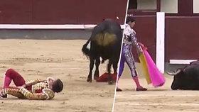 To se nepovedlo! Přítele královské rodiny nabodl na rohy býk