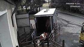 Veterináři podali trestní oznámení na jatka kvůli týrání zvířat.