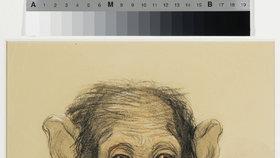Kupkova studie k opici.