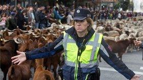 Ulice Madridu obsadily ovce a kozy (20. 10. 2019)