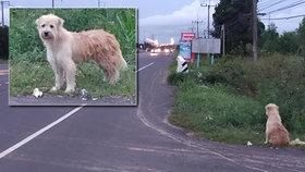 Dojemný příběh věrného psa: Čtyři roky čekal na místě, kde vypadl majiteli z korby auta