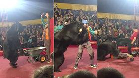 Obrovitý cvičený medvěd přímo před zraky diváků brutálně napadl svého krotitele.