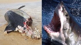 Angličané se bojí, že jejich vody obráží lidožravý žralok. Na břeh se vyplavila půlka delfína.