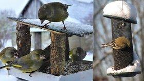 Začíná zima a s tím i sezóna krmení ptáků. Víte jak správně na to?