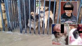 Tři dobrovolnice zemřely při záchraně psů z útulku, který postihla povodeň.