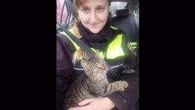 Podobný případ z Brna: Strážníci zachránili kotě z protihlukové stěny.