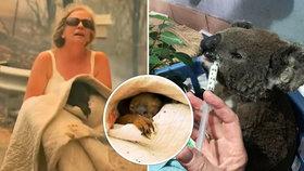 Zemřel koala Lewis, kterého Australanka zachránila z plamenů. Trpěl nepřetržitou bolestí