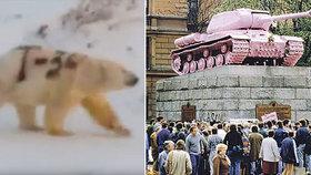 Ledního medvěda posprejoval neznámý pachatel. Nápis odkazuje na slavný tank.