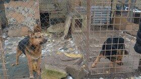 Množírny budou mít utrum, zvířata v nich žijí mnohdy v příšerných podmínkách.
