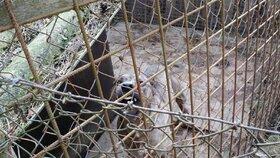 Množírny budou mít útrum, zvířata v nich žijí mnohdy v příšerných podmínkách