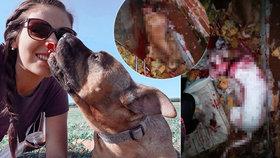 Ele z Ledče nad Sázavou podřezali milované psy: Utekli k sousedovi, vyhrožoval, že je zabije, tvrdí