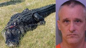 Kusy těla muže byly nalezeny v útrobách aligátora. Zvíře ho však nezabilo.