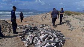Na pláži v Kapském Městě se objevily vyplavené mrtvolky žraločích mláďat.
