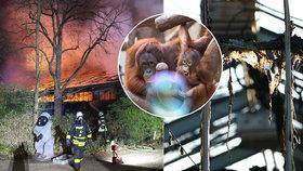 Desítky zvířat uhořely zaživa při požáru zoo: V plamenech zemřelo i pět orangutanů a gorila Massa.