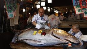 Majitel sushi restaurace v Japonsku vydražil tuňáka za 40 milionů korun.
