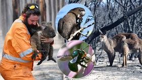 Požáry v Austrálii přinesly zkázu Klokaního ostrova. Vzácné druhy jsou na pokraji vyhynutí.