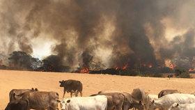 Na Klokaním ostrově se znovu rozšiřují požáry.