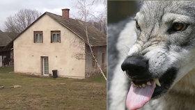 Otřesná tragédie na Chrudimsku: Pes zabil matku čtyř dětí!