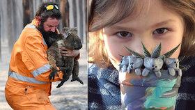 Australské požáry se nejhůře podepsaly na koalech.