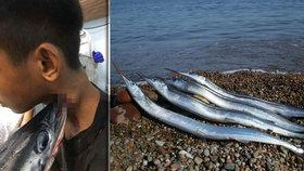V Indonésii napadla ryba mladíka: Probodla mu krk skrz naskrz!