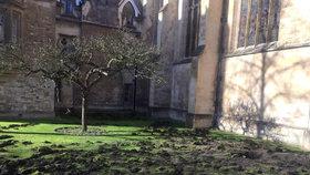 Aktivisté protestovali netradičně - rozkopali trávník u historické budovy univerzity v Cambrigde.