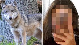 Dívku prý na procházce napadl vlk!