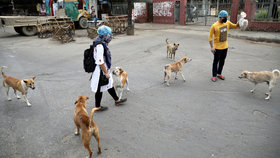 S identifikací lidí nakažených koronavirem by časem mohli pomáhat psi.