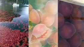 Vyprázdněné filipínské pláže ovládly růžové medúzy.