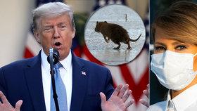 Prezident Trump řeší problém s krysami a první dáma nasadila roušku.