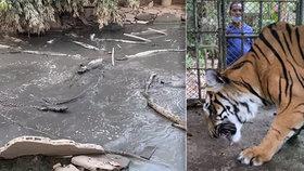 Pohled k pláči. Opuštěná zoo v Thajsku plná zubožených zvířat.