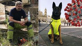 Budou čeští psi umět vyčenichat koronavirus? (ilustrační foto)